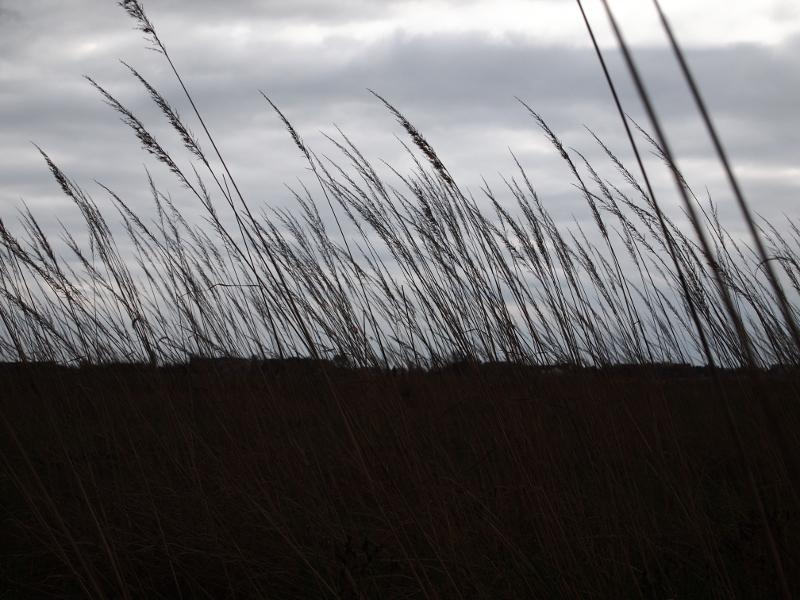 Tempelhofer Feld bei Regenwetter