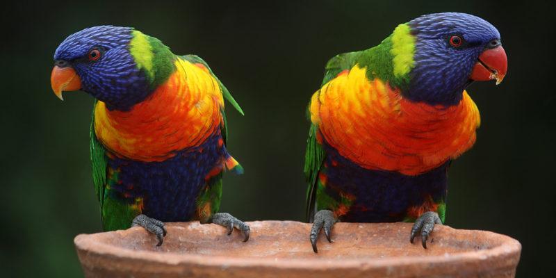 Bunte Vögel - Mica schreibt über ihre Pansexualität