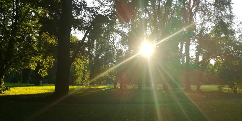 Blick von meiner Lieblingsparkbank: Park mit Sonne, die durch die Bäume scheint.